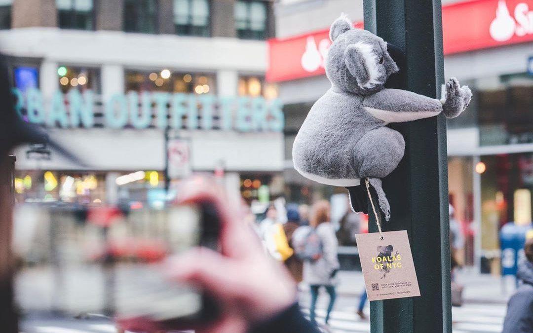 Koalas en Nueva york